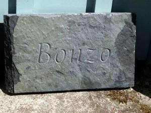 bonzo1